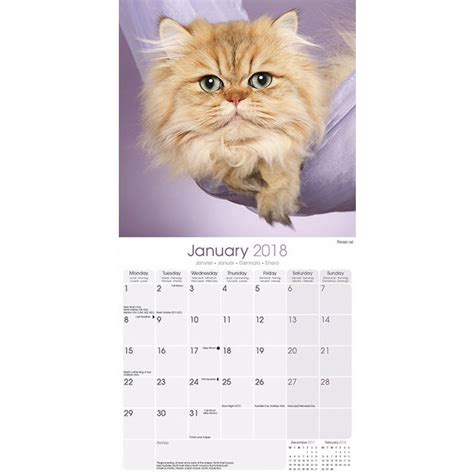 Calendrier Des Chats Calendrier Chats 2018