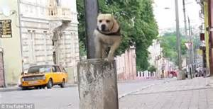 Sliding Down The Banister Video Of Parkour Dog Running And Leaping As He Makes