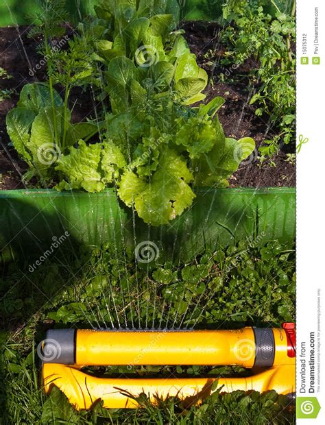 vegetable garden sprinklers watering vegetable garden stock photography image 15075312