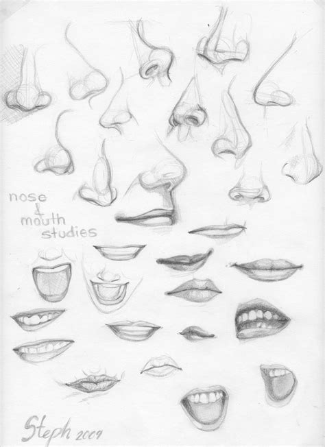 how to draw noses nose and studies by tigre lys on deviantart