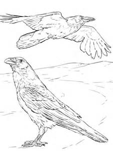 printable version of the raven common raven coloring page free printable coloring pages