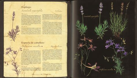atlas ilustrado de la 843055193x atlas venta de libros susaeta ediciones atlas ilustrado de las plantas medicinales y curativas