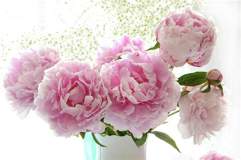 peonies in vase pink peonies in vase www imgkid the image kid has it