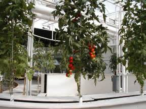 Indoor Tomato Garden Kit - aeroponic gardening how to create an aeroponic system for plants