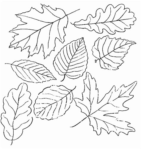 printable coloring pages leaves printable leaf coloring pages coloring me