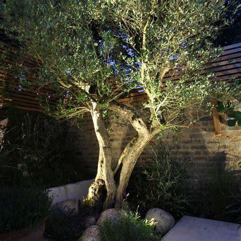 garten gethsemane ltd 2 kews spiked garden light uplighting olive tree jpg 800