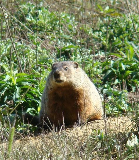 groundhog day utah 320 best in to easter images on