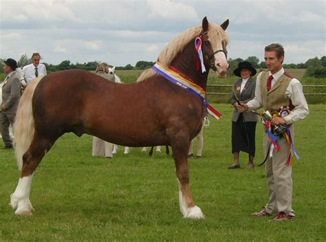 welsh section a showing results 2008 the jamico stud