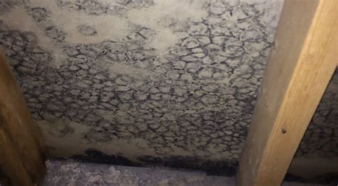 willowbrook il black mold basement mold removal before