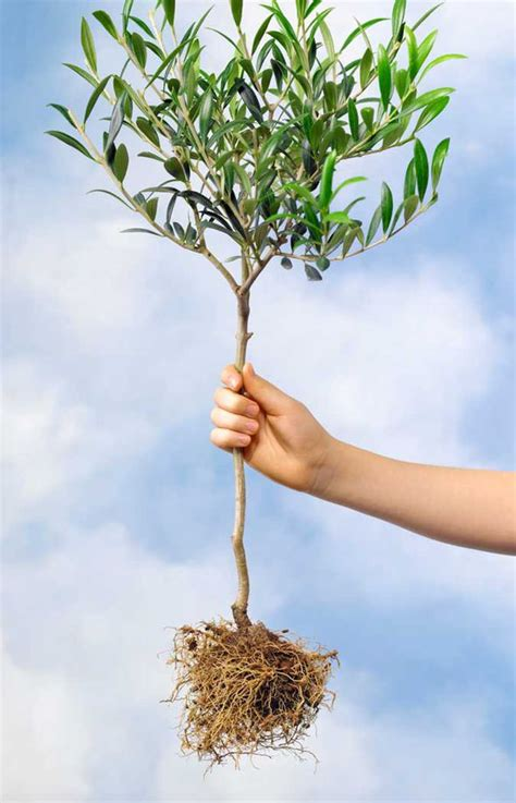 where to put a tree in a small room alan titchmarsh s tips on planting trees and shrubs