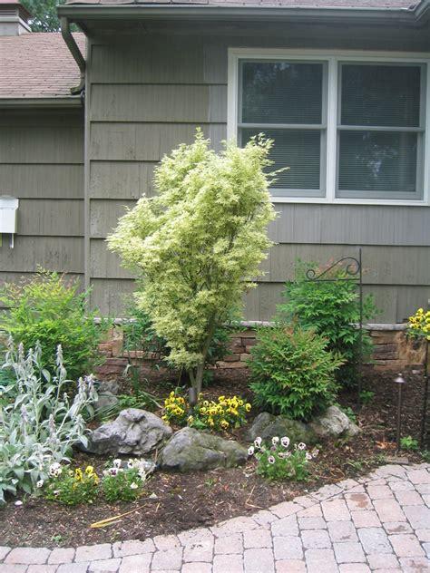 plants shrubs