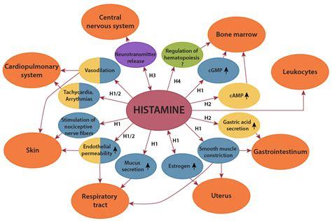 alimenti contengono istamina elenco histamine intolerance understanding the science