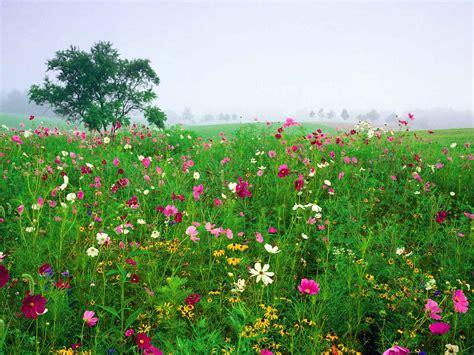 imagenes flores silvestres fotos de flores silvestres imagui
