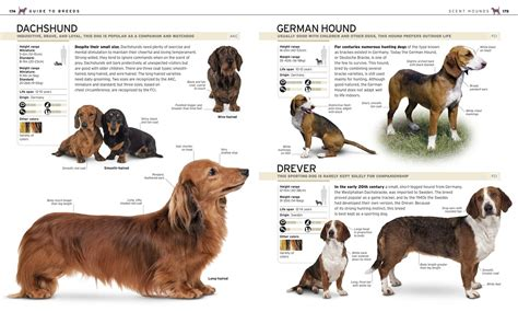 complete breeds all breeds with pictures pdf wallpaper sportstle