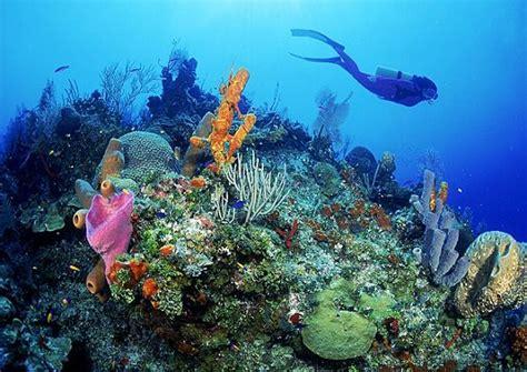 dive francesi isla de aruba un descanso merecido en el caribe