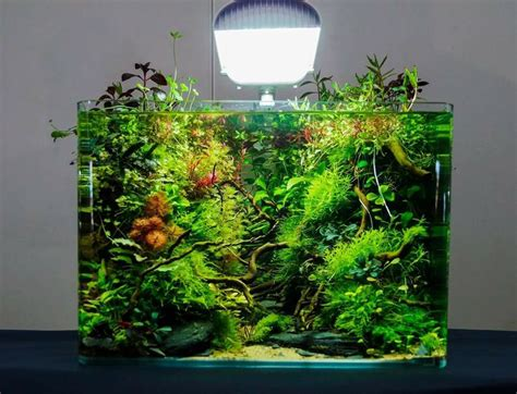 Nano Aquascaping 17 best ideas about nano aquarium on aqua