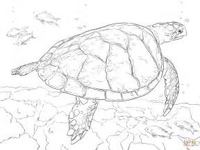 realistic hawksbill sea turtle coloring page free