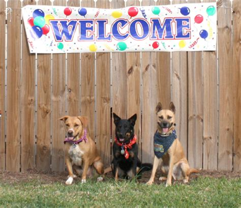 puppy finder houston houston trainer check out our website to find a houston trainer