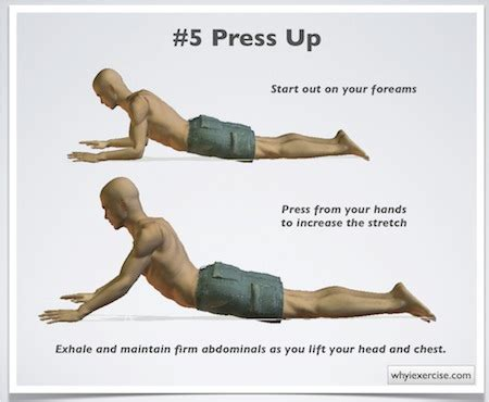 exercises for low back detailed easy to follow illustrations