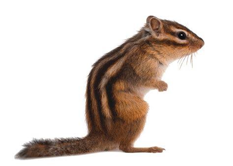 55 best ilo squirrel images on pinterest