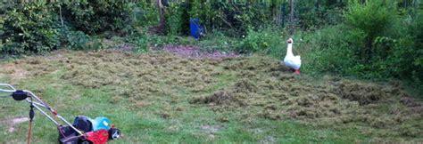 Vertrockneten Rasen Retten by Filz Bek 228 Mpfen Rasen Vertikutieren Garten News F 252 R