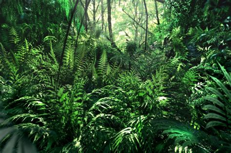 xfrog tropical scenes jurassic ferns