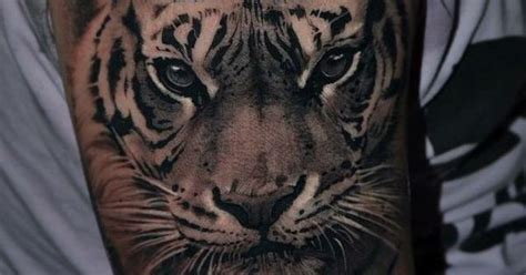 tiger denmark realistic tiger tattoo made in sinners inc denmark