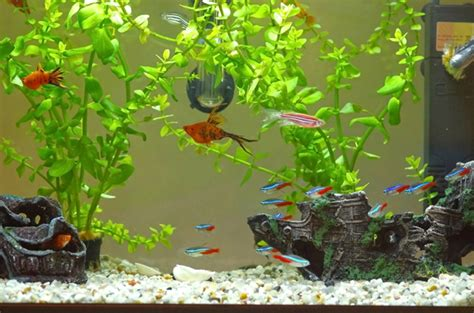 Decorations For A Fish Tank by How To Safely Clean Your Tank And Aquarium Decorations