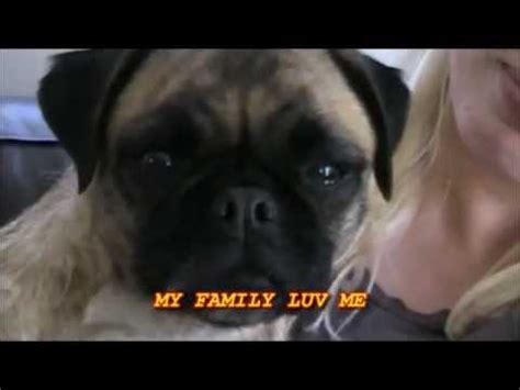 loca pug singing pug loca own playback