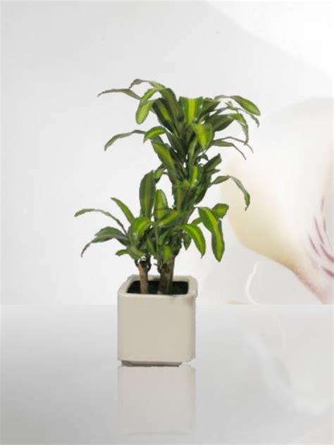 venta de plantas para jardin venta de plantas plantas de ornato para interiores