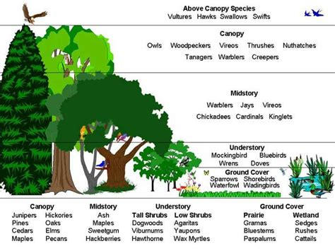 pattern formation in plants flowchart layers of the rainforest this diagram shows the varying