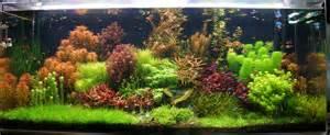 Fauna Aquascape 125 Gallon Freshwater Planted Dutch Tank Rainforest Concepts