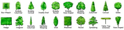 tree finder help using treefinder