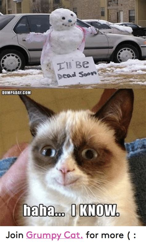 Soon Cat Meme - soon cat meme www imgkid com the image kid has it