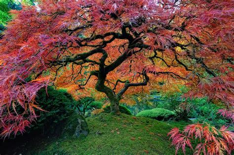 beautiful trees 16 of the most magnificent trees in the world bored panda