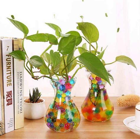 menanam tanaman menggunakan hidrogel bibitbungacom