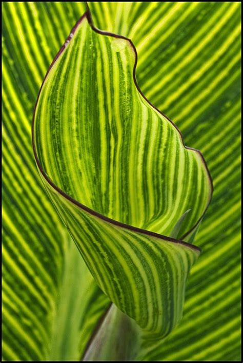natural pattern flower 43 best images about patterns in nature on pinterest