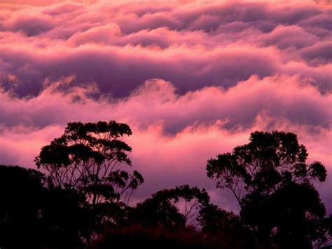 Hermosa Hawaiian Pink hawaii haleakala national park
