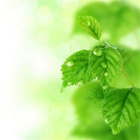 wallpaper daun hijau hd daun hijau latar belakang hd gambar hijau gratis foto