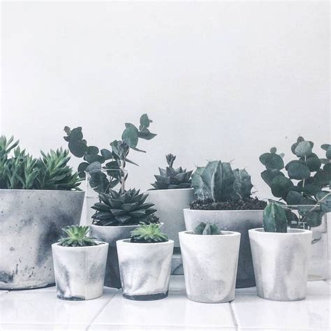 white pot 25 best ideas about cement planters on