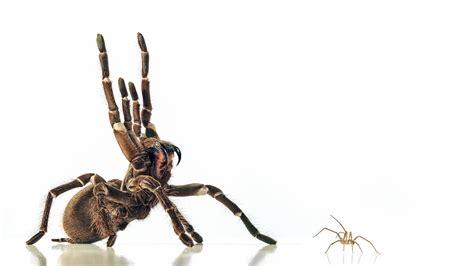 spider images spider genes put a new spin on arachnids potent venoms