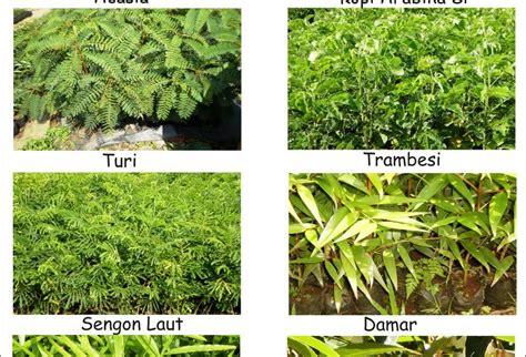 Net Pelindung Tanaman Pt Bina Usaha Flora Gambar Bibit Pohon Kehutanan