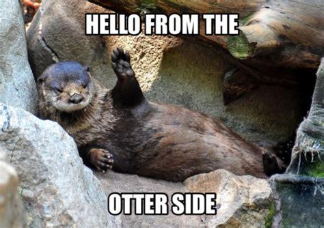 Otter Memes - otter memes tumblr
