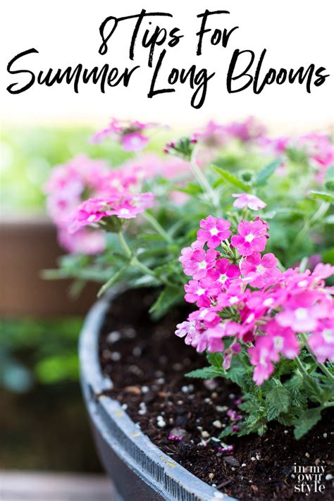 how to grow flowers that will bloom all summer long in