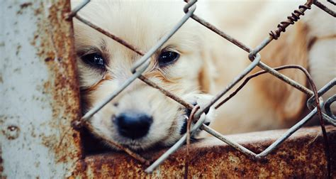 selling puppies laws arizona raises a middle finger to puppy mills with a that pet stores can only sell