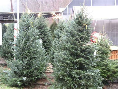 loudoun county va tree farms for trees to decorate or