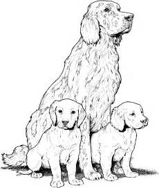 breed coloring pages - Golden Retriever Coloring Pages