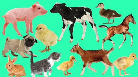 Animal Farm Keeps Desktop Clean animals farm baby name and sounds farm animals for