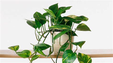 growing indoor plants video southern living