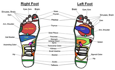 Liver Detox Pressure Points by Reflexology And Foot Charts Free Herbs Info